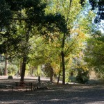 Fall 2010-12