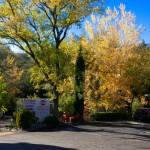 Fall 2010-14