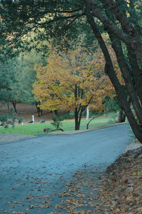 Fall Photos   Pinezanita