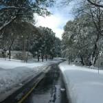 Snow-19