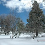 Snow-22