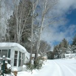Snow-24