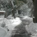 Snow-29