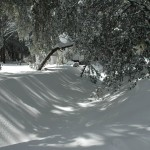 Snow-56