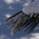 Snow-57